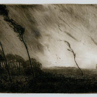 Trees Blowing in a Storm (Robertson Kirtland Mygatt)