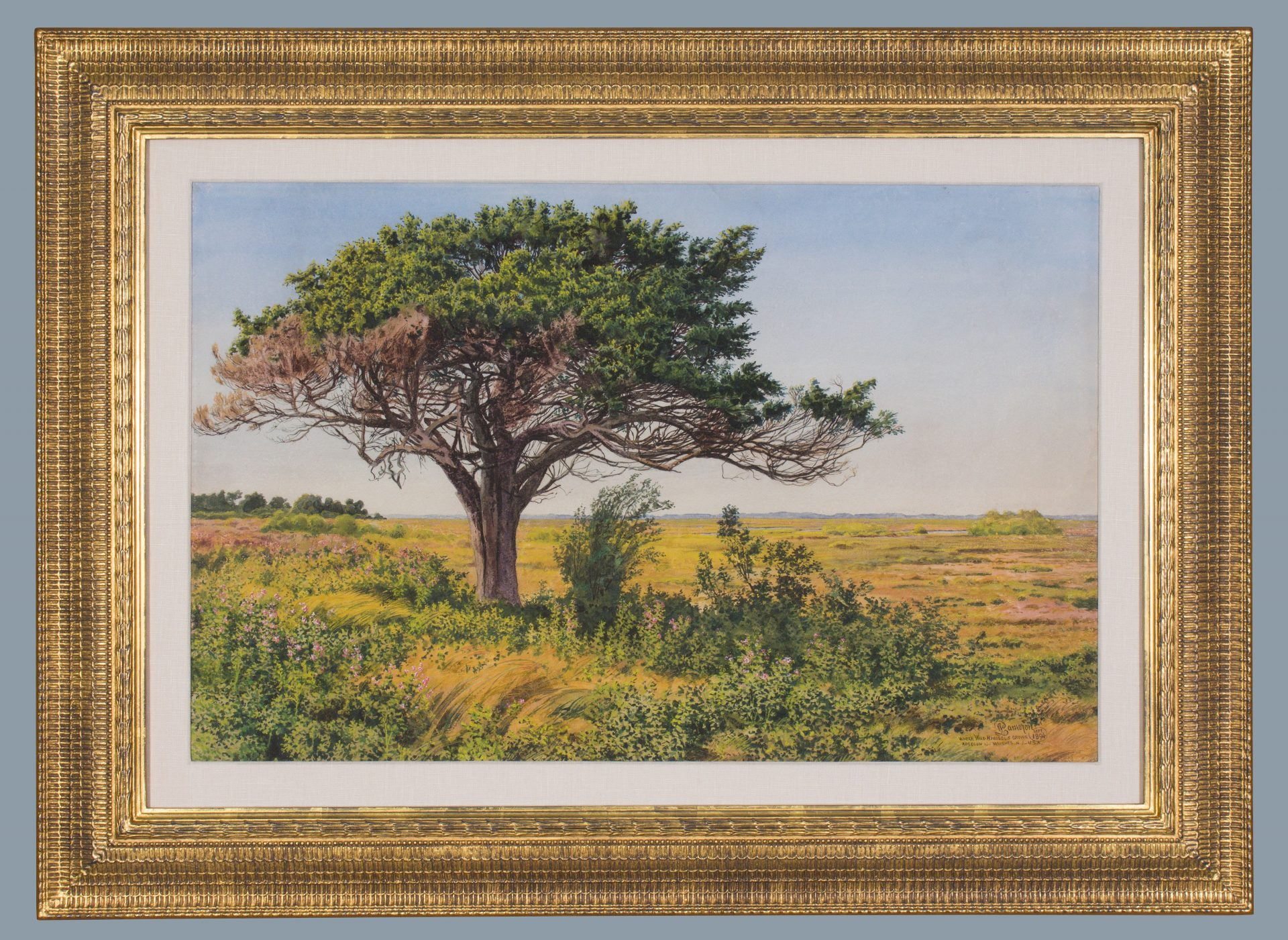 Where Wild Hibiscus Grows: Absecon, NJ FRAMED (Peter Caledon Cameron)
